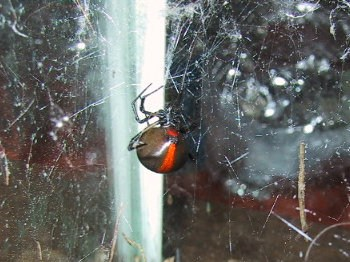Keeping Spiders as Pets