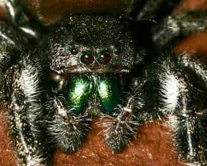 Spider Questions & Answers